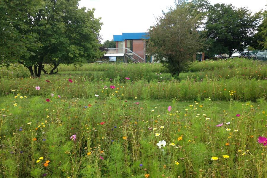 Jach res fleuries angers par couleur jardin couleur jardin for Entretien jardin angers