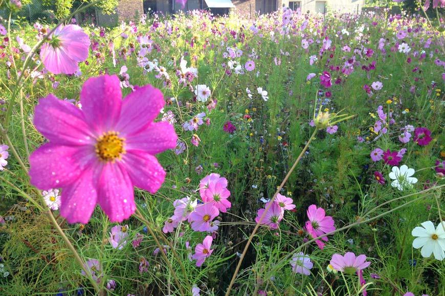 Jachère fleurie Couleur Jardin paysagiste Angers