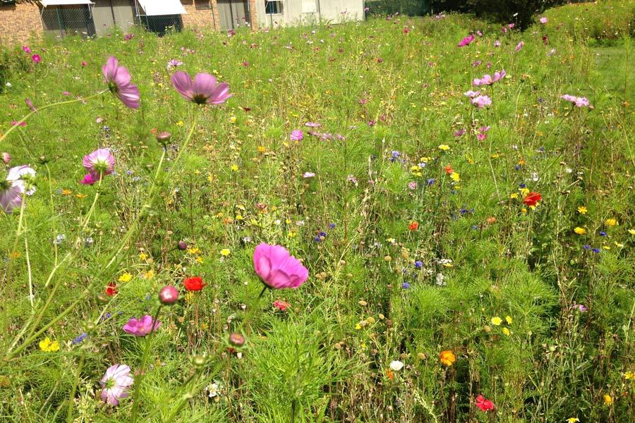 Jach res fleuries angers par couleur jardin couleur jardin - Cloture jardin angers ...