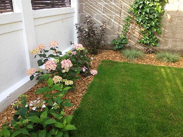 Gazon de placage couleur jardin for Entretien jardin angers