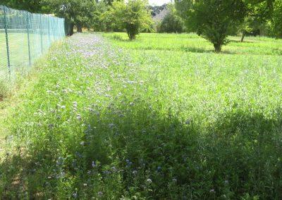 jachere-fleurie-apicole-couleur-jardin-angers-04