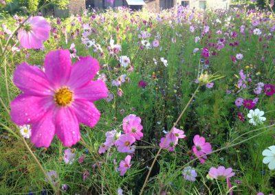 jachere-fleurie-couleur-jardin-angers-01