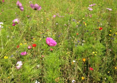 jachere-fleurie-couleur-jardin-angers-06