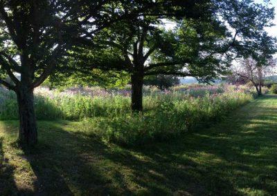 jachere-fleurie-couleur-jardin-angers-10