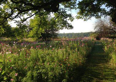 jachere-fleurie-couleur-jardin-angers-11