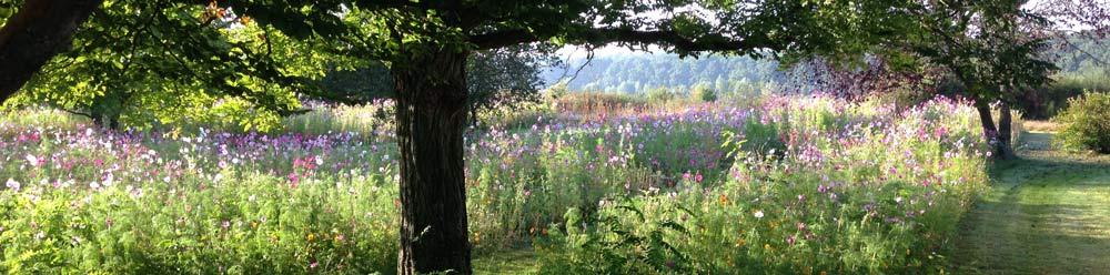 jachere-fleurie-couleur-jardin-angers-h