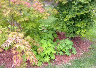 plantations-acer-couleur-jardin-01
