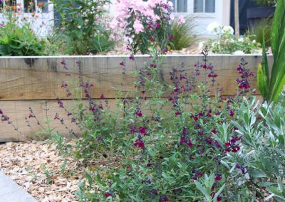 salvia_violette_de_loire_couleur_jardin_1