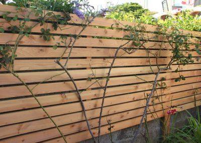 palissade_bois_planches_horizontales_douglas_plante_grimpante