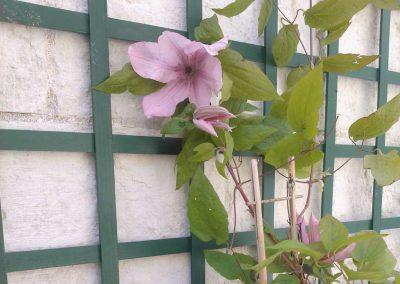 plantations_clematite_treillis_couleur_jardin_01
