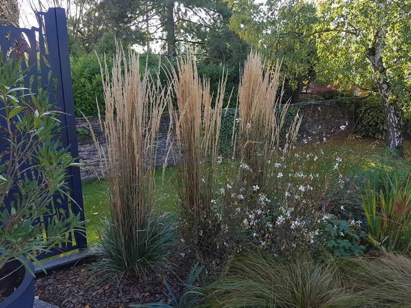 massif-graminees-jardin-couleurs-automne