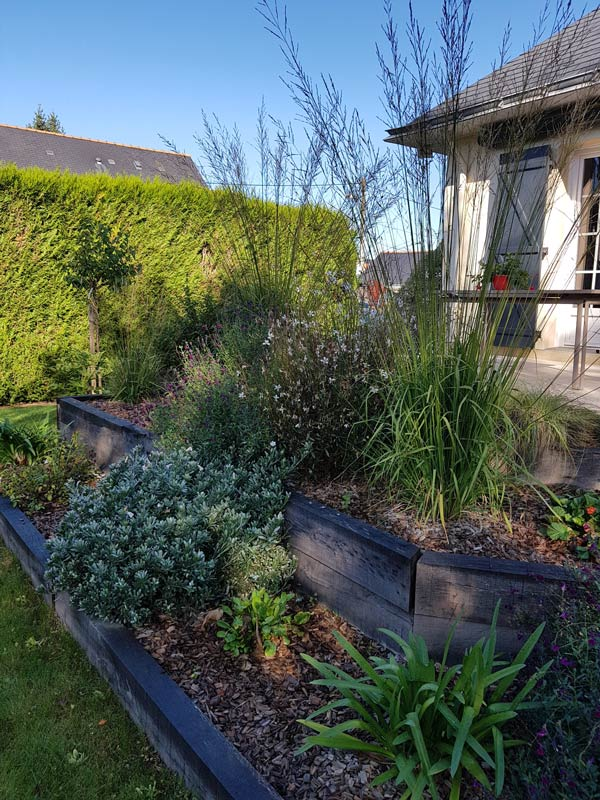 massif-vivaces-convolvulus-bordures-bois-angers-couleur-jardin